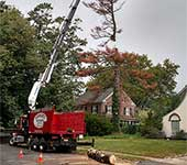 Utilizing the long reach of our boom to remove a dead pine tree