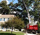 Our boom trucks have the most extensive reach for safe tree work on your property