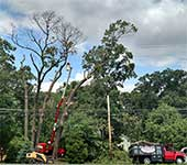 We have the skill, experience, and equipment to safely remove trees even in close proximity to power lines