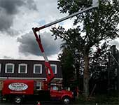 Stormy weather does not stop our tree service crew