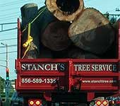 Once we're done removing trees, we tidy up your property perfectly and haul away all evidence