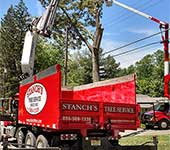 Removing tree near power lines is a frequent occurance for us and we have the expertise to do it safely