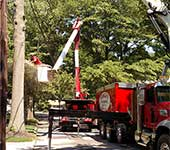 Another example of safe tree removal working around multiple power lines