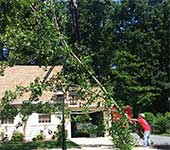 Branches hanging over a roof lead to many problems and should be removed to protect the roofing