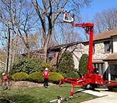 Our turf friendly spiderlift is ideal for tree trimming even on sloped terrain like this