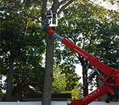Our equipment allows us to provide tree service without damage to lawns, fences, and other landscape