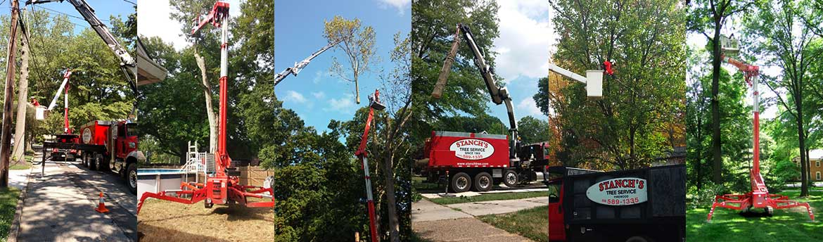 Tree Service for Woodbury Heights, NJ