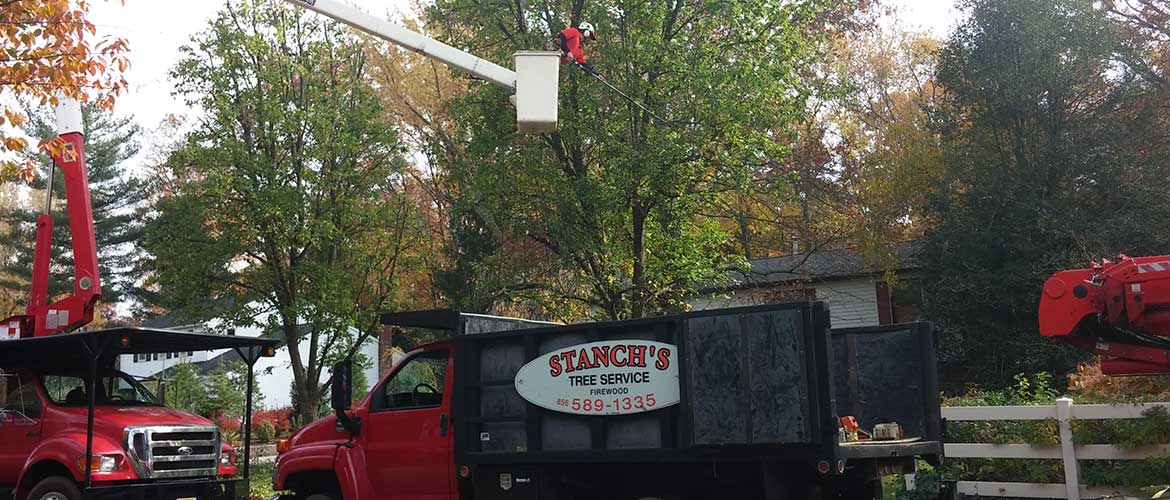 Tree Trimming/Pruning Service