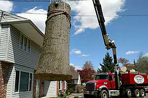 Tree Removal Services in South Jersey